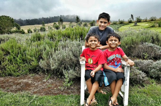 Day Trip to the Ali'i Kula Lavender Farm