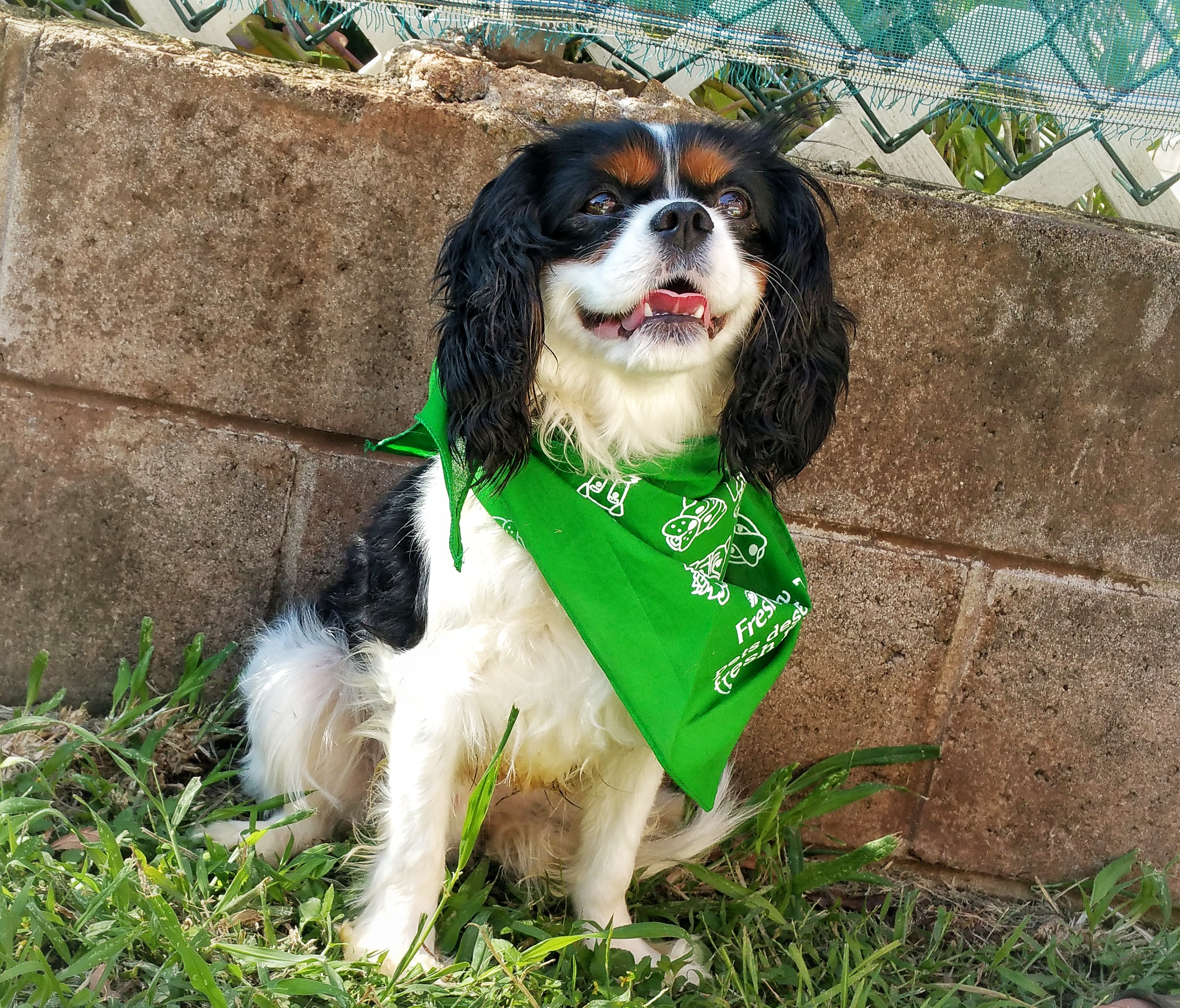 freshpet, meal time, king charles cavalier spaniel, dog, cat, animals, family fur babies, pet food, pet meals, freshpet dog food, dog food, review, eating, healthy meal,