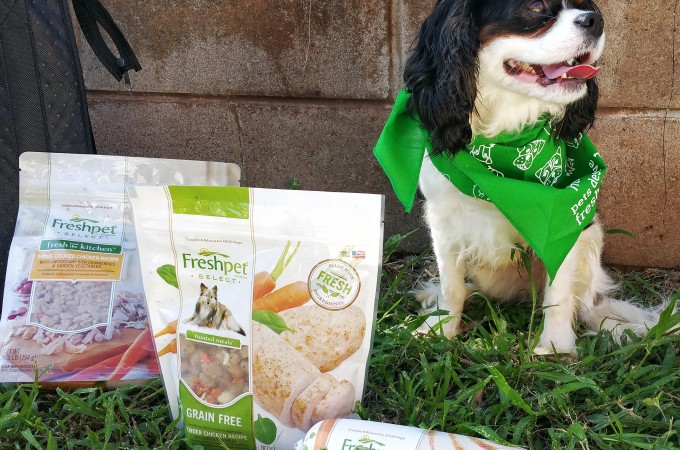 Mealtime Madness – How Freshpet Makes Our Ikaika Happy